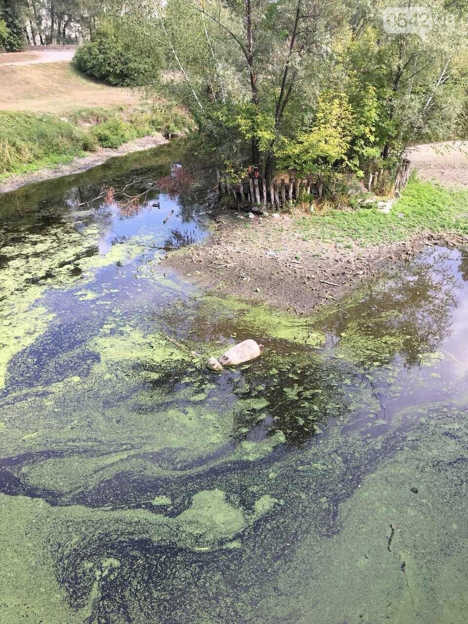 У Сумах озеро у парку Кожедуба перетворюється на смітник, фото-1