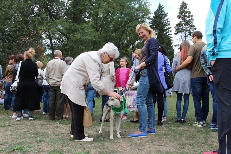 В Сумах на фестивале «Друг из приюта» 13 животных нашли дом, фото-5