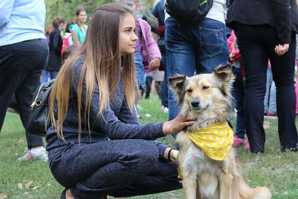 В Сумах на фестивале «Друг из приюта» 13 животных нашли дом, фото-2