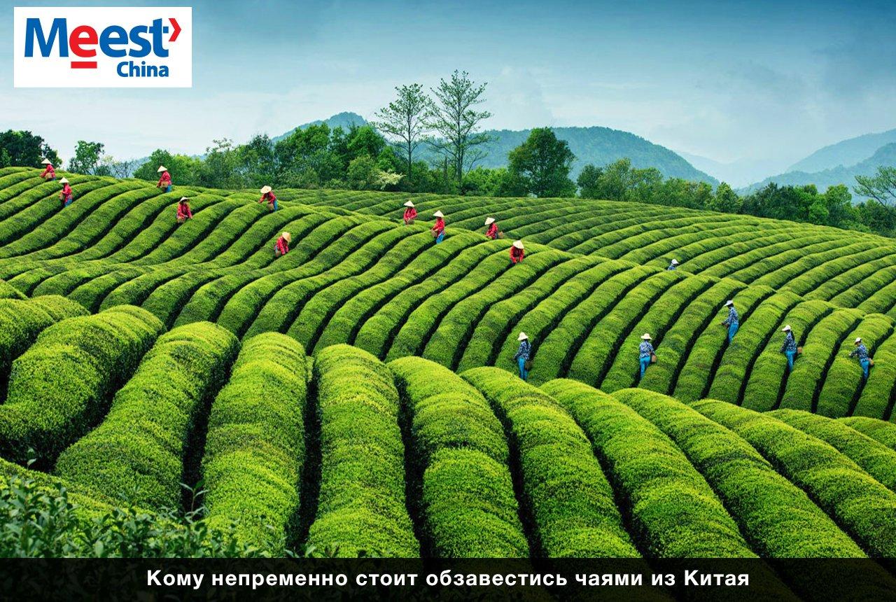 5 поводов купить чай из Китая, фото-1