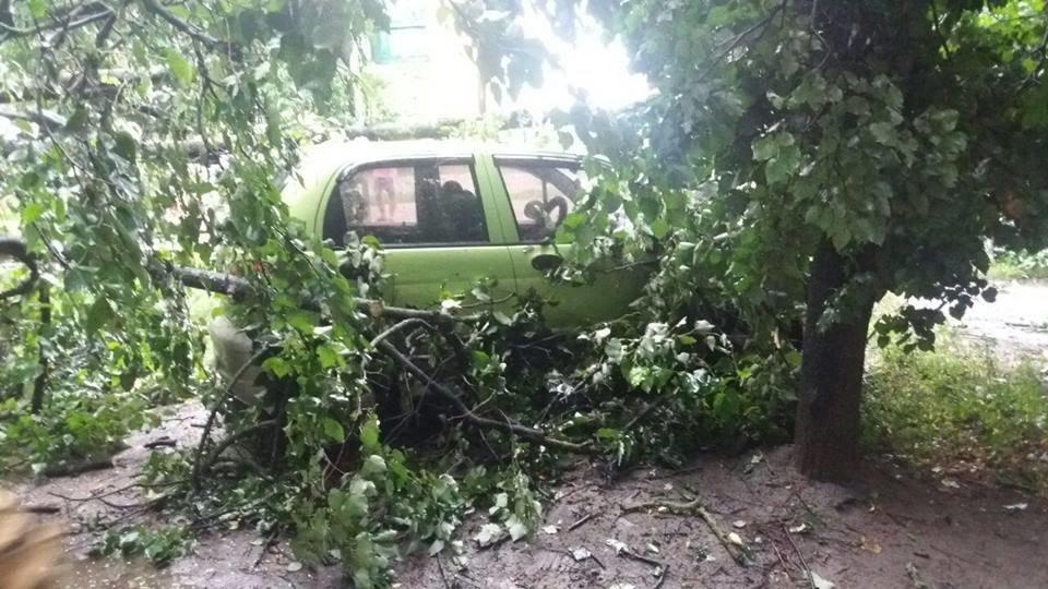 В Сумах аварийное дерево упало на автомобиль, фото-1