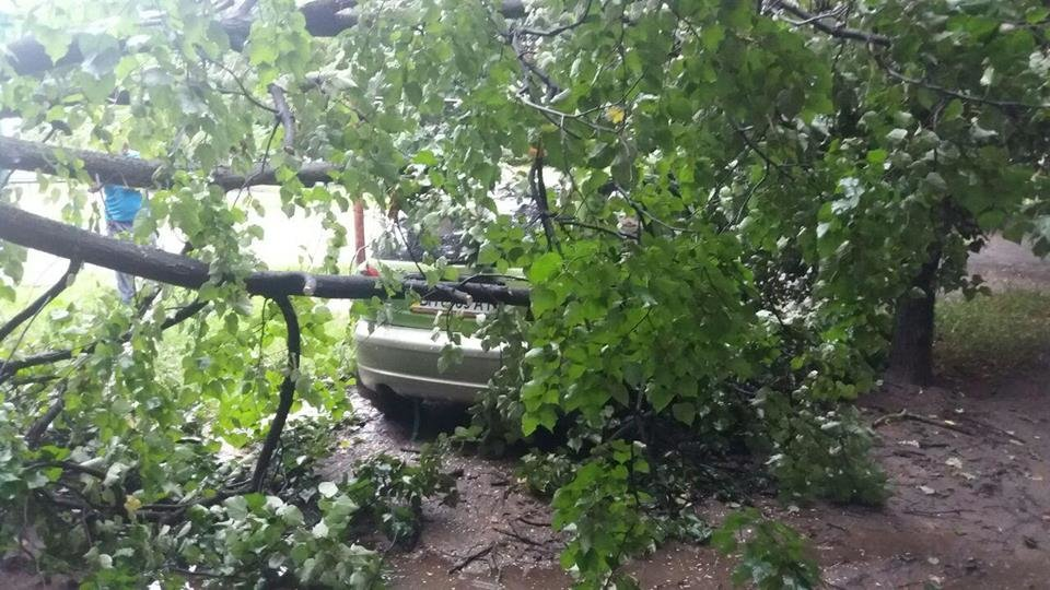 В Сумах аварийное дерево упало на автомобиль, фото-2