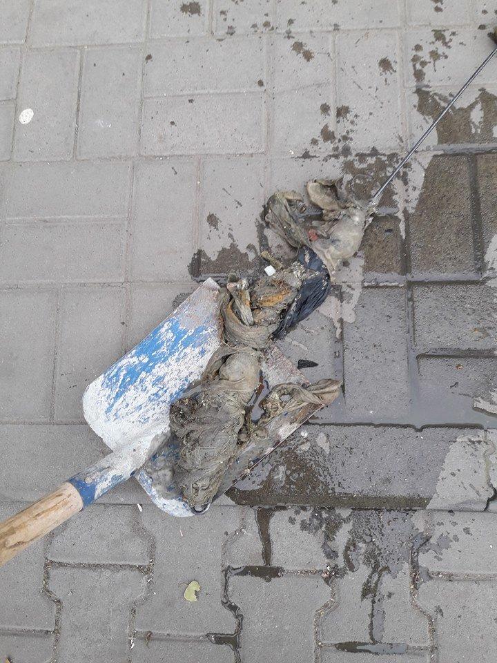 Коммунальщики показали фото того, что сумчане бросают в канализацию, фото-5