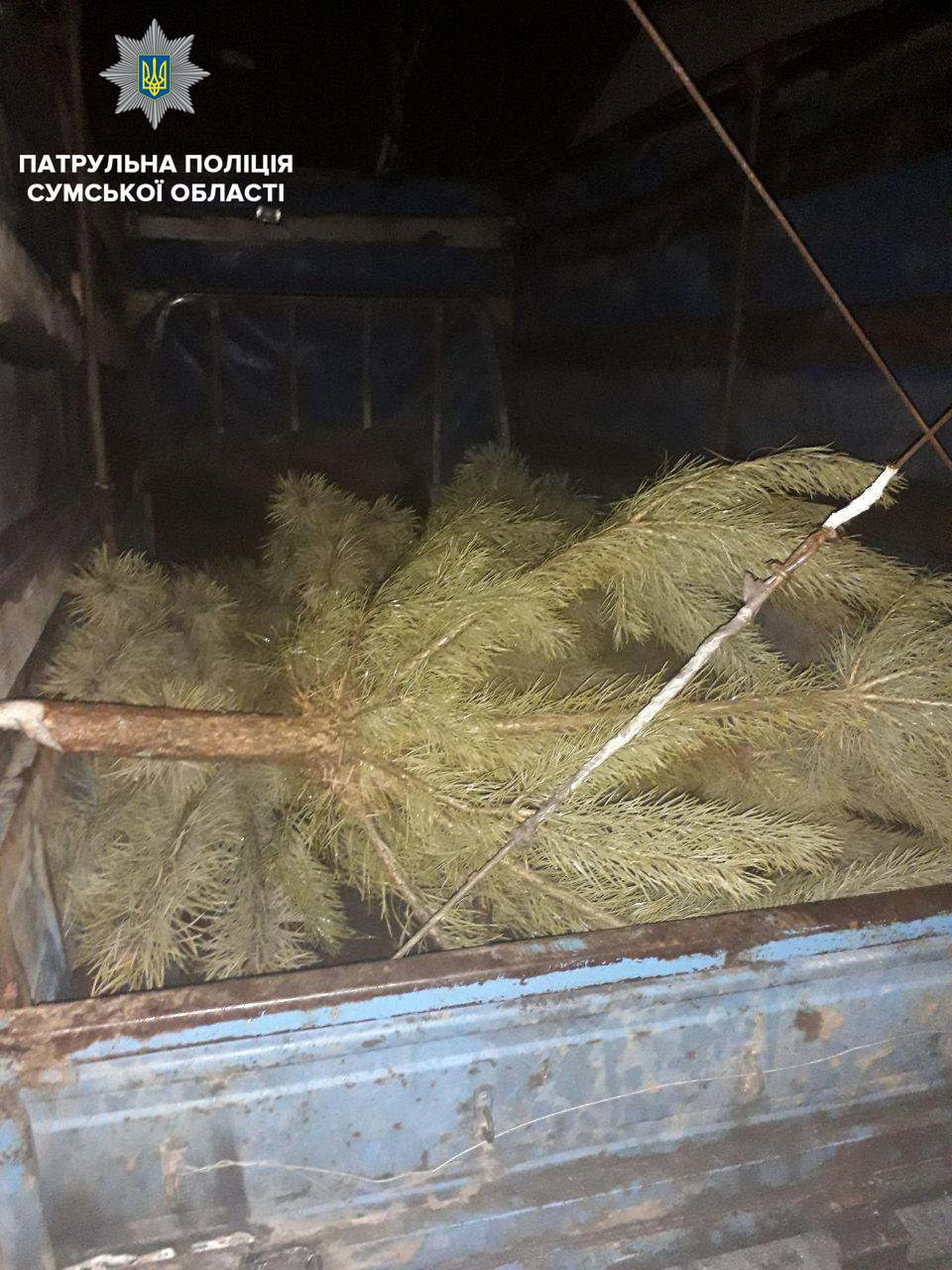 За неделю в Сумах выявили три автомобиля с незаконными новогодними деревьями, фото-2