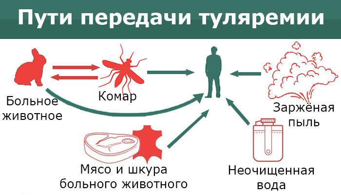 На Сумщине выявили инфекционную болезнь, вакцины от которой нет в Украине, фото-1