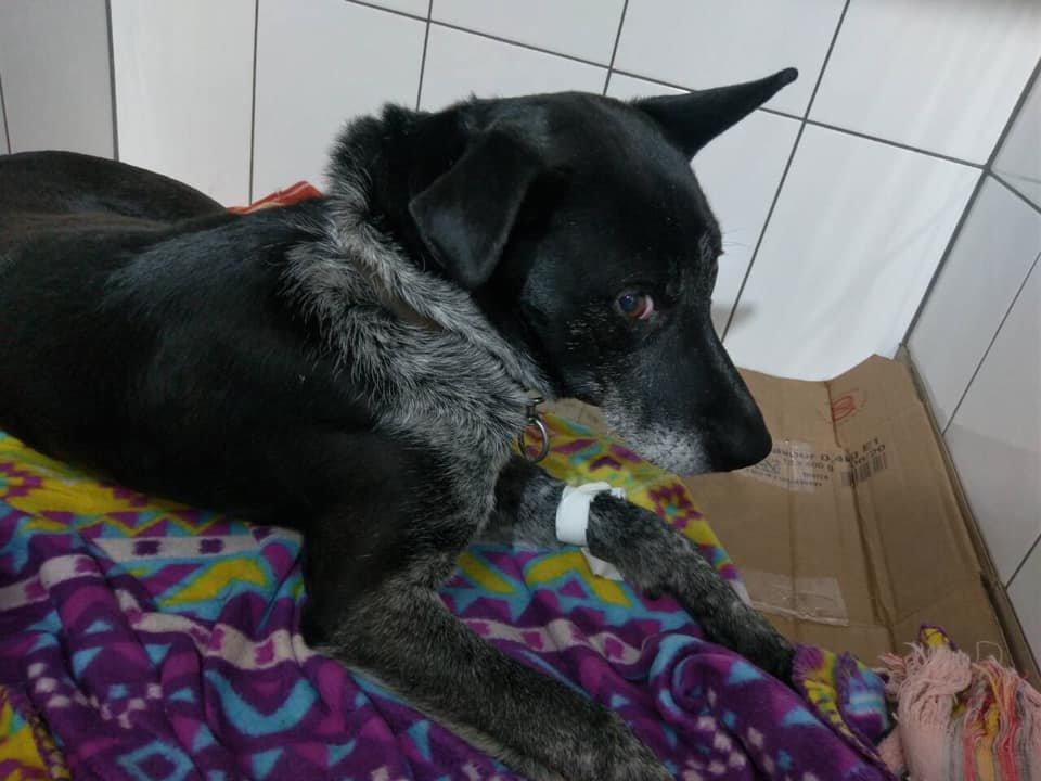 В Сумах рыбак спас собаку, которая тонула в реке, фото-1