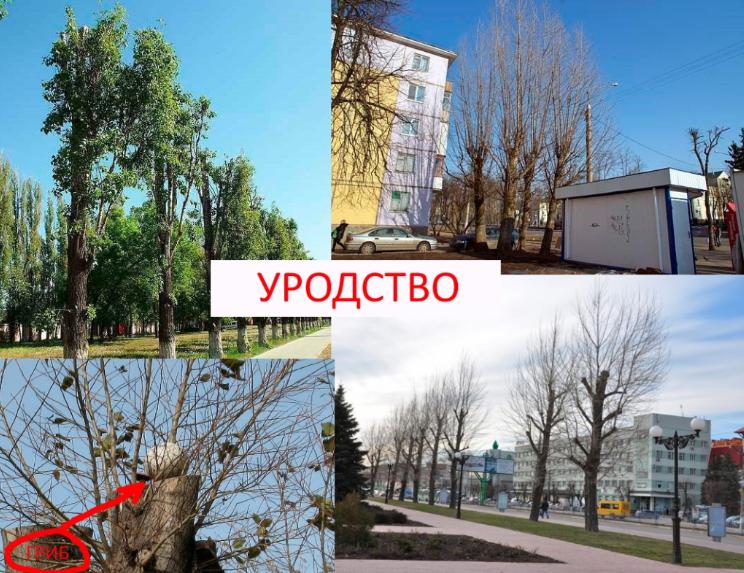 Сумчане просят не издеваться над деревьями, фото-1