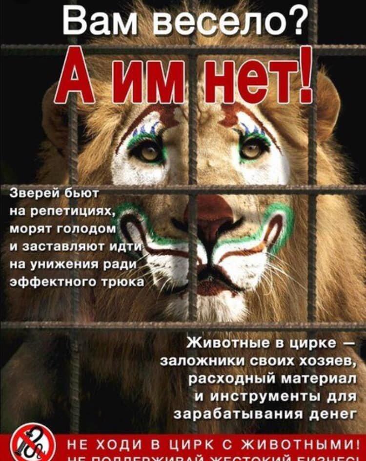В Сумском облсовете проголосовали за запрет цирка с животными, фото-2