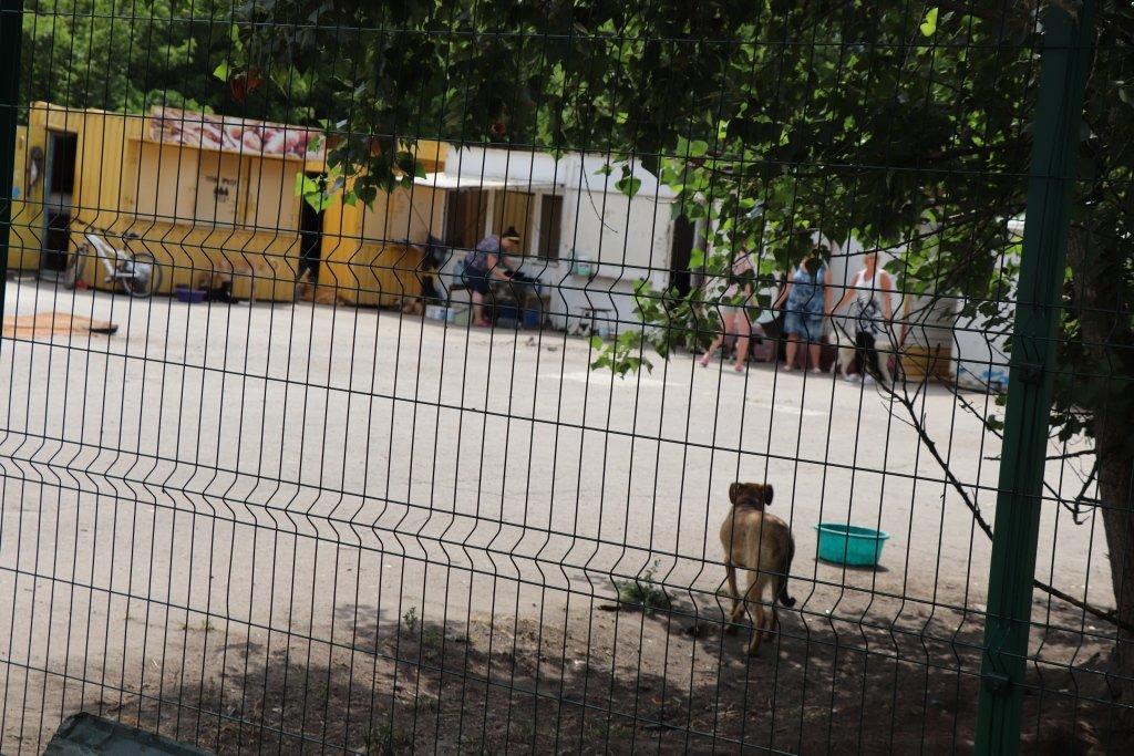У Сумах завершують облаштування комунального Центру перетримки безпритульних тварин, фото-2