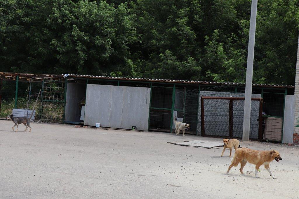 У Сумах завершують облаштування комунального Центру перетримки безпритульних тварин, фото-7