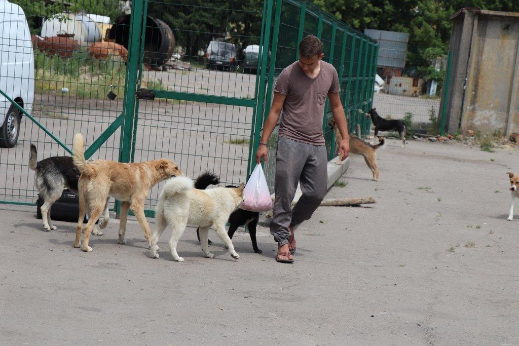 У Сумах завершують облаштування комунального Центру перетримки безпритульних тварин, фото-8