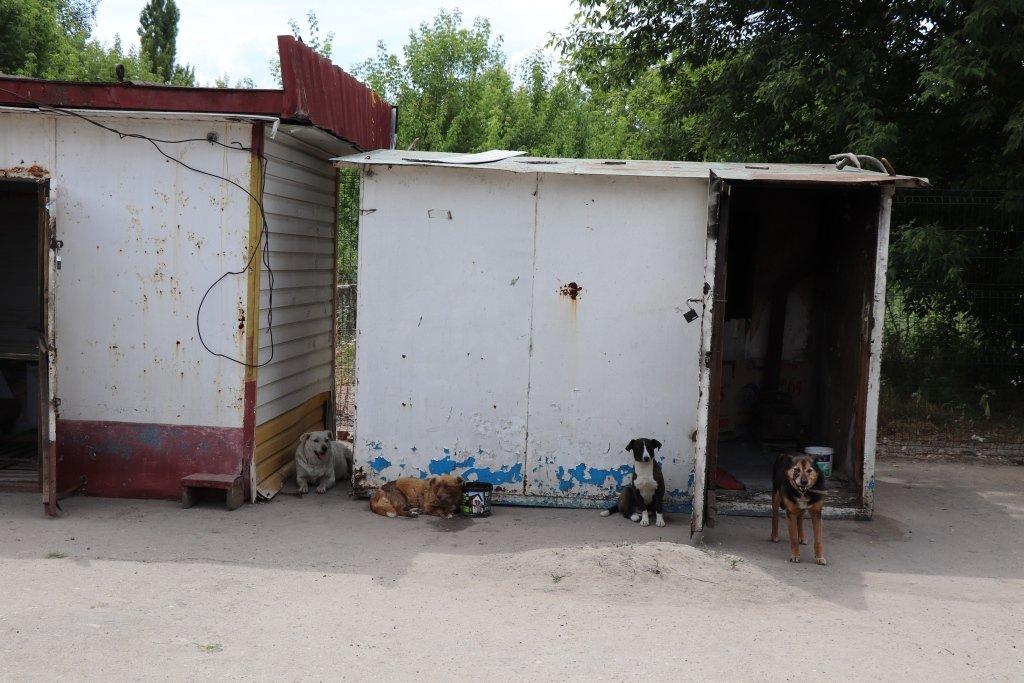 У Сумах завершують облаштування комунального Центру перетримки безпритульних тварин, фото-9