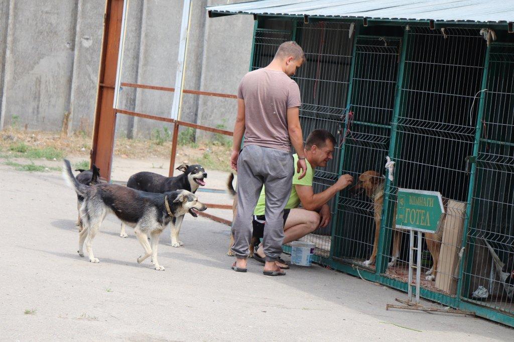 У Сумах завершують облаштування комунального Центру перетримки безпритульних тварин, фото-10