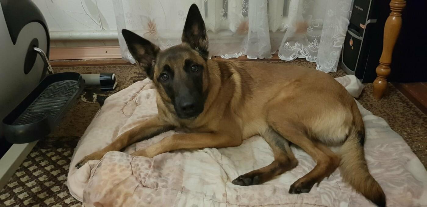 У Сумах, завдяки собаці, рятувальники вчасно прийшли на допомогу бабусі, що впала в 3-х метровий погріб , фото-1
