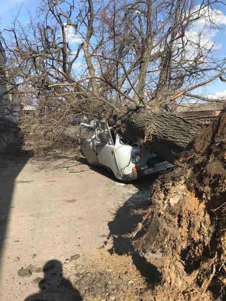 На Сумщині дерево розтрощило автомобіль, фото-1