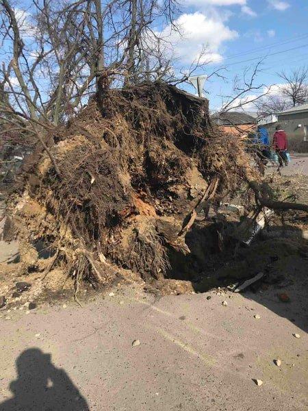На Сумщині дерево розтрощило автомобіль, фото-2