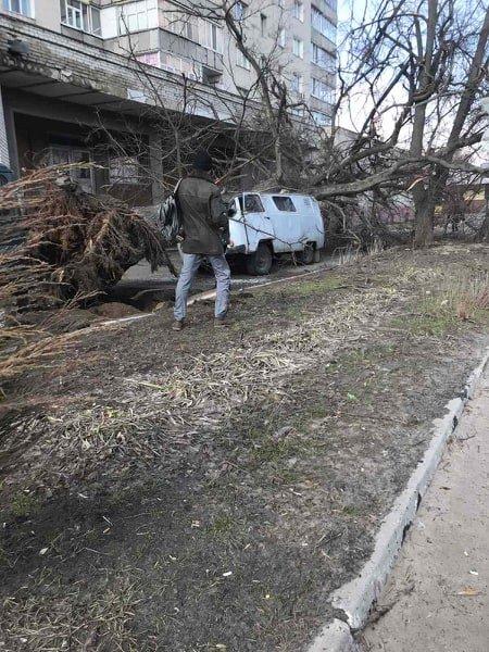На Сумщині дерево розтрощило автомобіль, фото-3