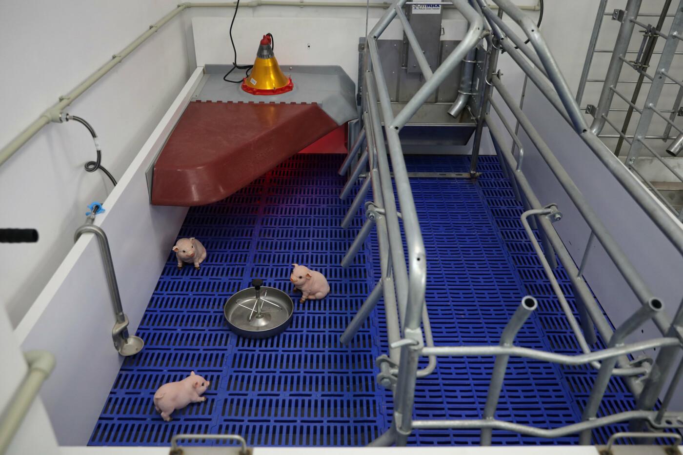 У Сумському НАУ знають, як протидіяти африканській чумі свиней, фото-4