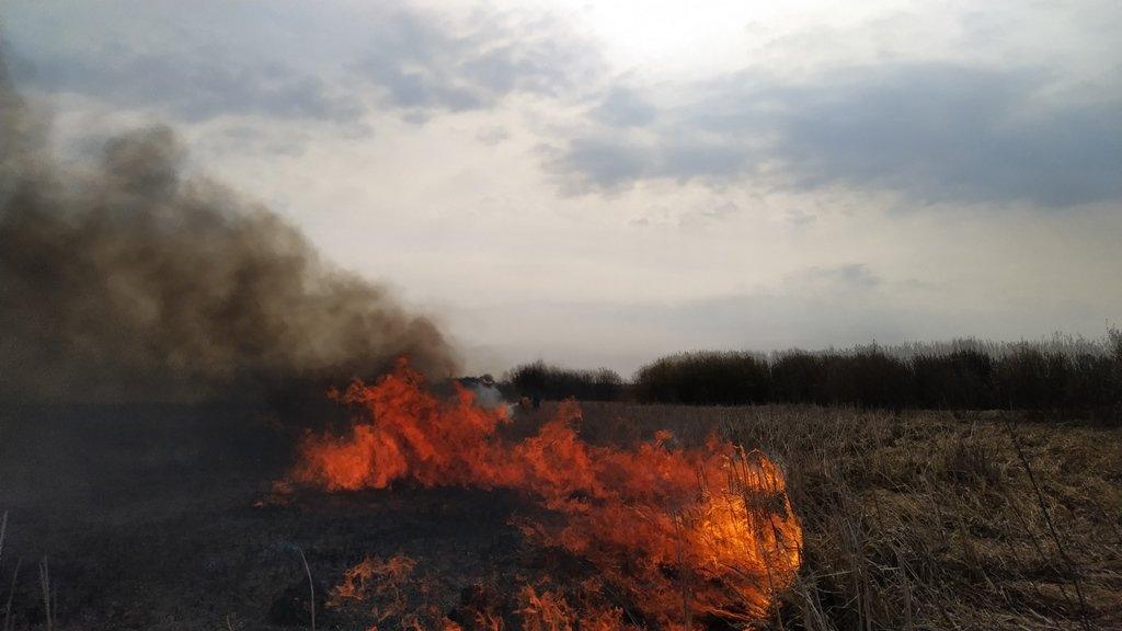 На Сумщині вогнеборці, ліквідовуючи загоряння 2 га рослинності, врятували ліс , фото-3