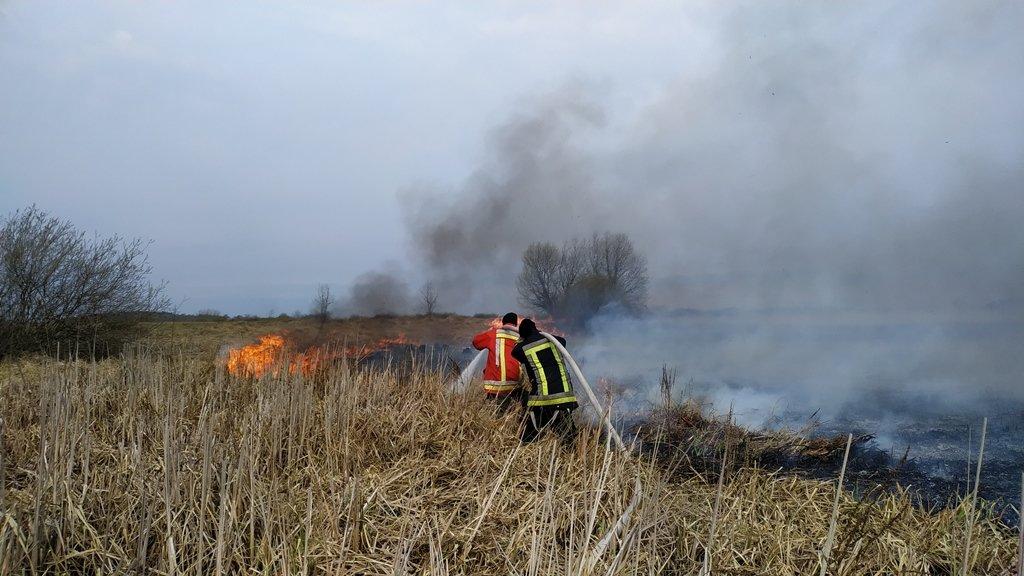 На Сумщині вогнеборці, ліквідовуючи загоряння 2 га рослинності, врятували ліс , фото-1