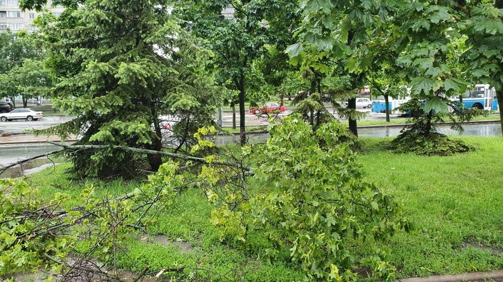 Буревій у Сумах: зламані дерева, паркани та пошкоджені автівки , фото-3