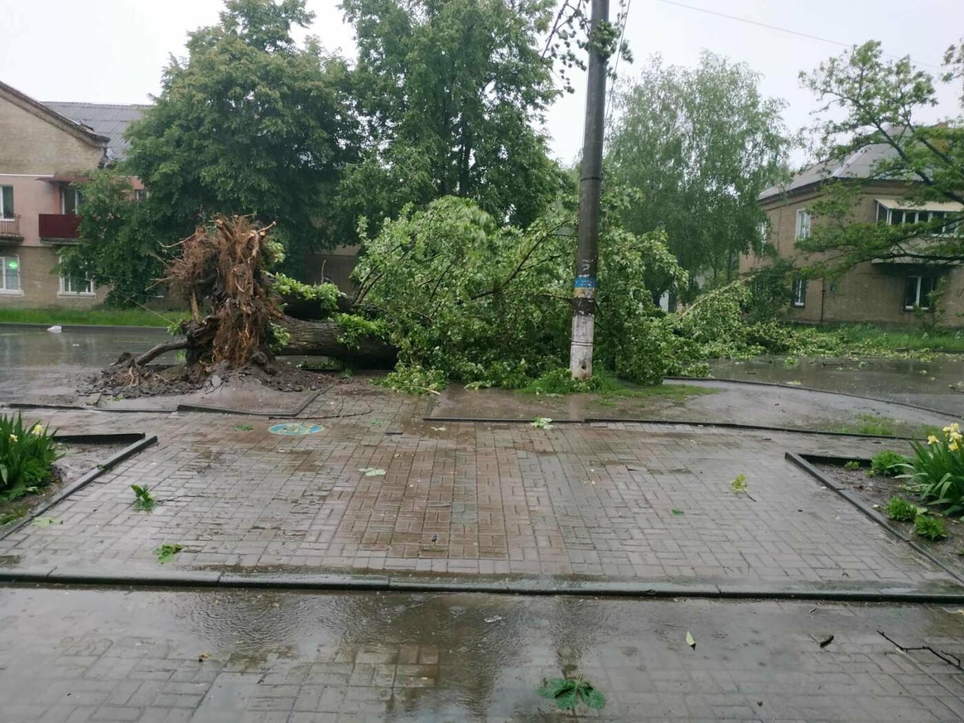 Буревій у Сумах: зламані дерева, паркани та пошкоджені автівки , фото-2