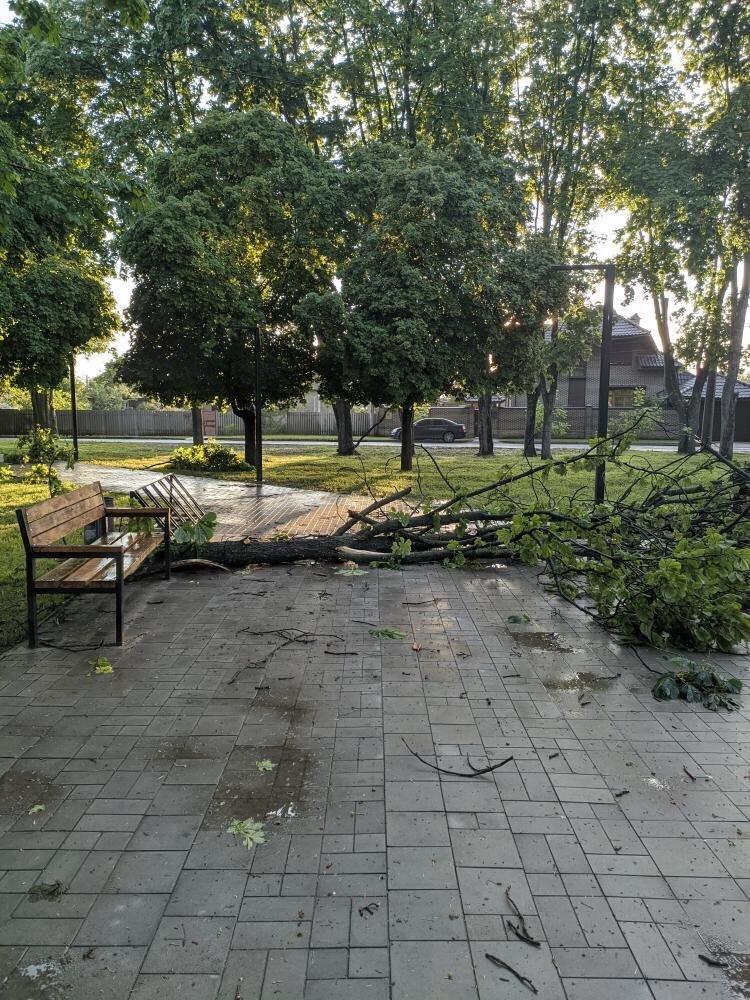 Буревій у Сумах: зламані дерева, паркани та пошкоджені автівки , фото-8