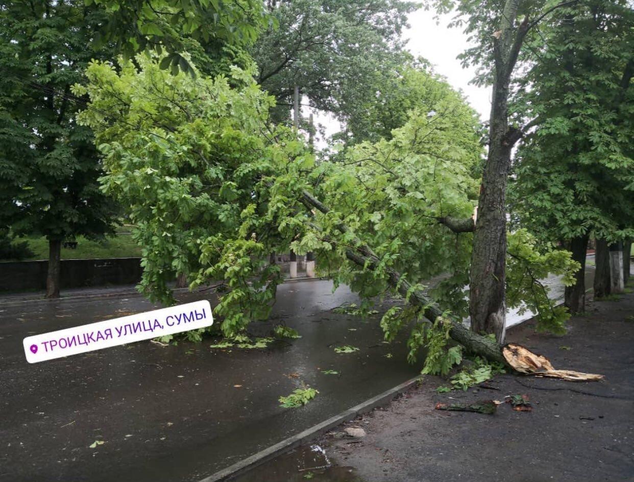 Буревій у Сумах: зламані дерева, паркани та пошкоджені автівки , фото-10