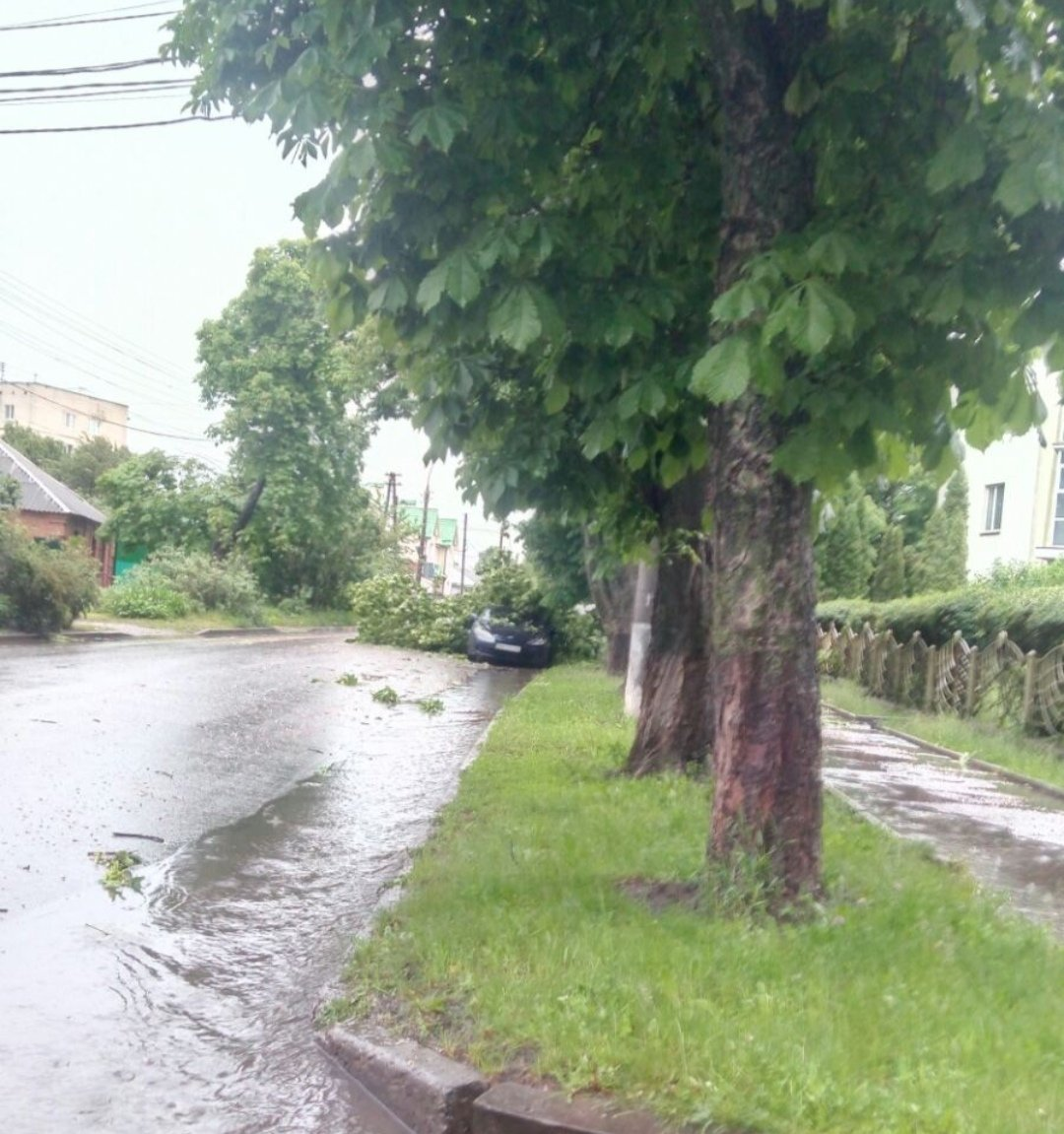 Буревій у Сумах: зламані дерева, паркани та пошкоджені автівки , фото-7