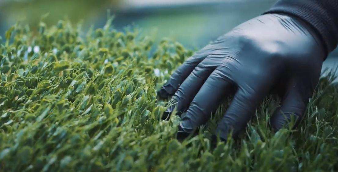 «Кто знает»: сумчанин выращивает микрозелень, фото-2