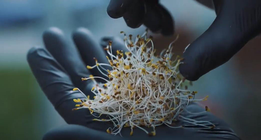 «Кто знает»: сумчанин выращивает микрозелень, фото-3