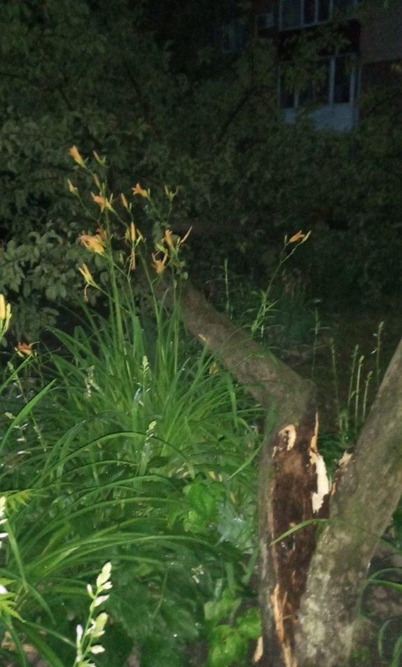 На Сумщині дерево впало на дитячий майданчик, фото-1