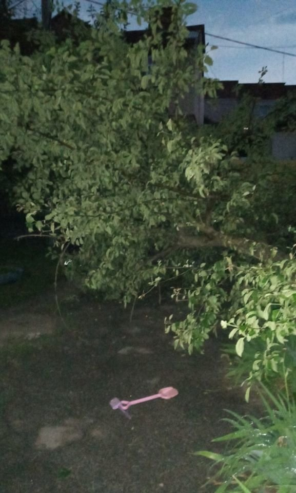 На Сумщині дерево впало на дитячий майданчик, фото-2