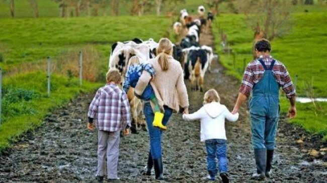 Сімейні фермерські господарства Сумщини мають право на отримання часткової компенсації ЄСВ, фото-1