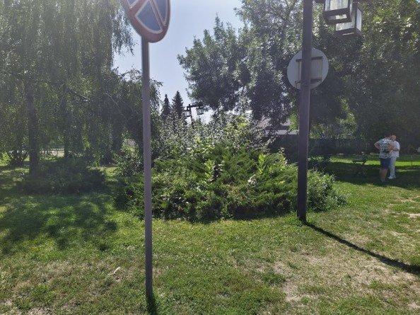 На Театральній площі у Сумах повирубують дерева, фото-3