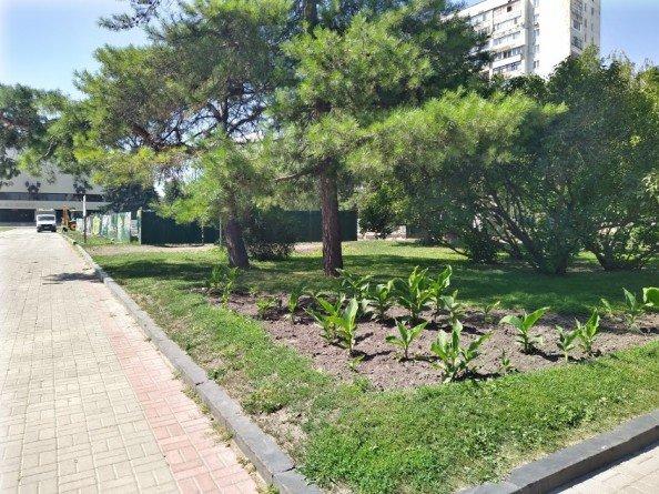 На Театральній площі у Сумах повирубують дерева, фото-2