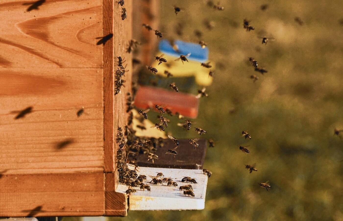 Бджоляри Сумщини зможуть отримати державну фінансову підтримку, фото-1