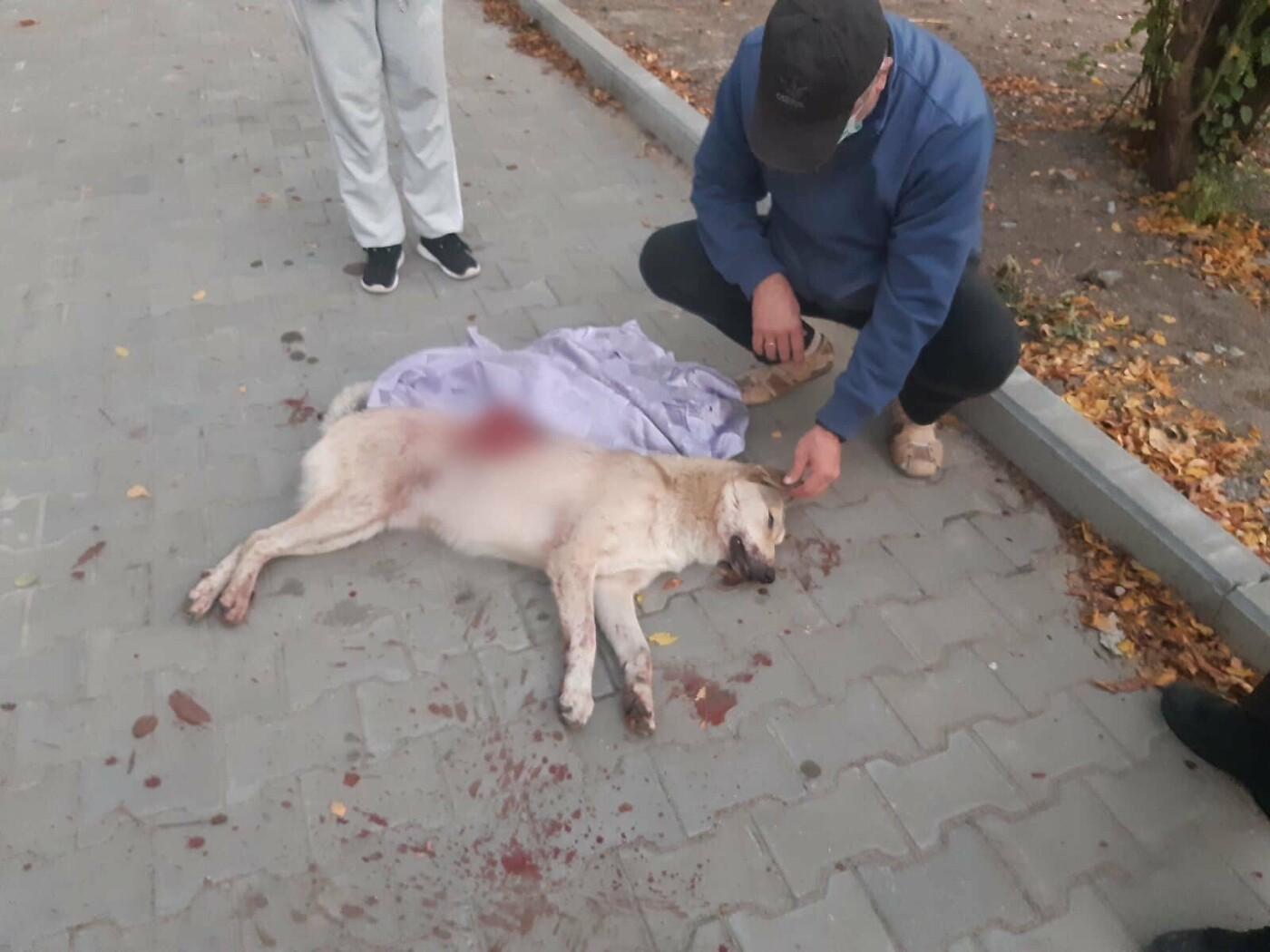 У Сумах шкуродер на очах у дітей зарізав собаку , фото-2