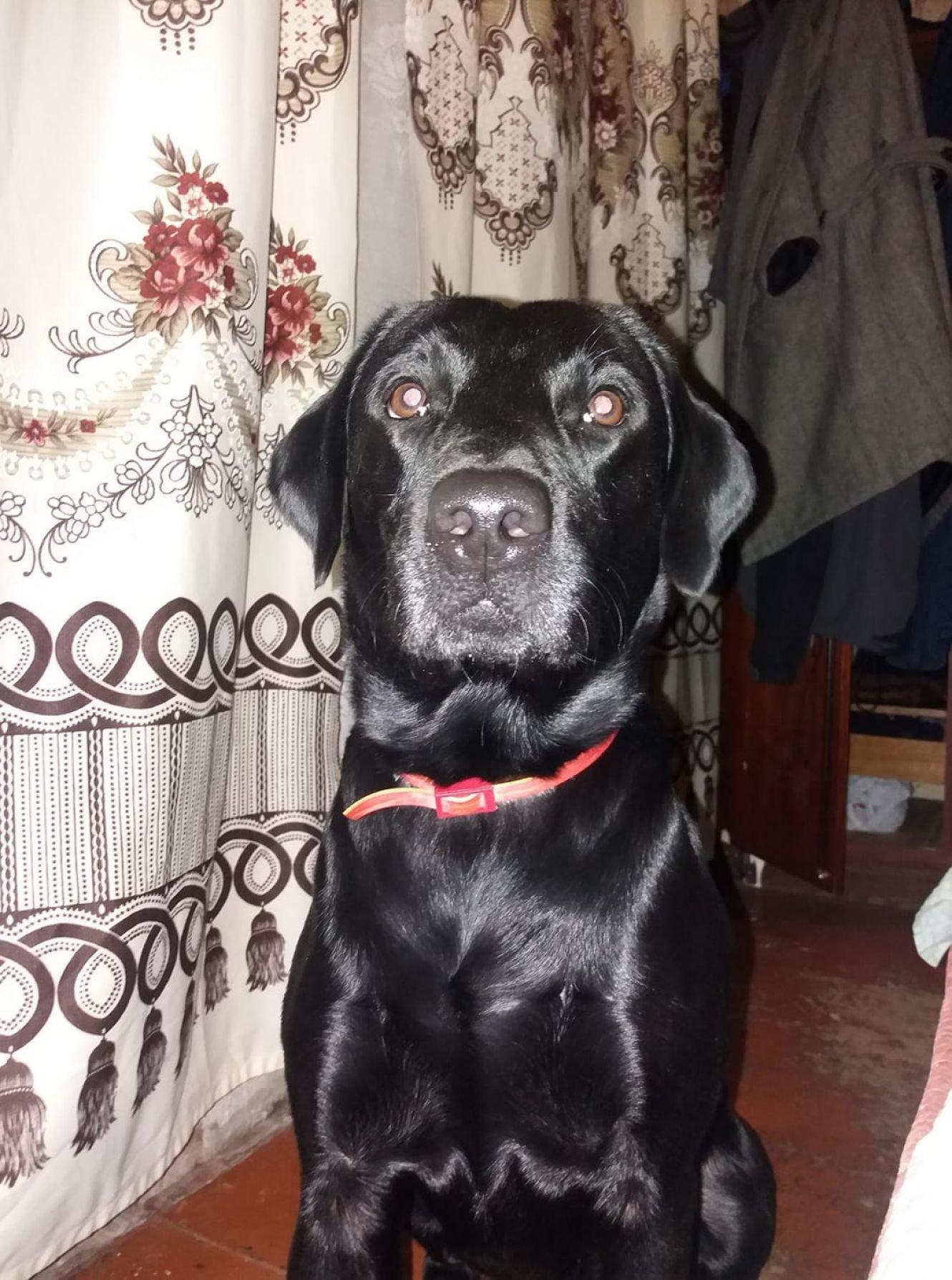 Сумська поліція проводить перевірку за фактом стрілянини у собаку, фото-1