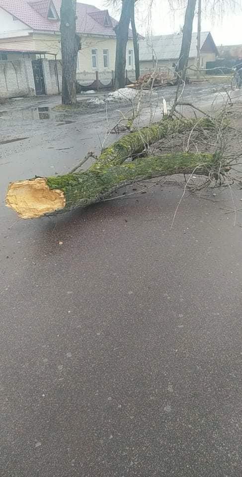 У Шостці на навчальну автівку впало дерево: є постраждалі , фото-3