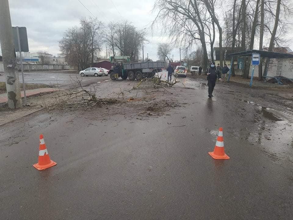 У Шостці на навчальну автівку впало дерево: є постраждалі , фото-4