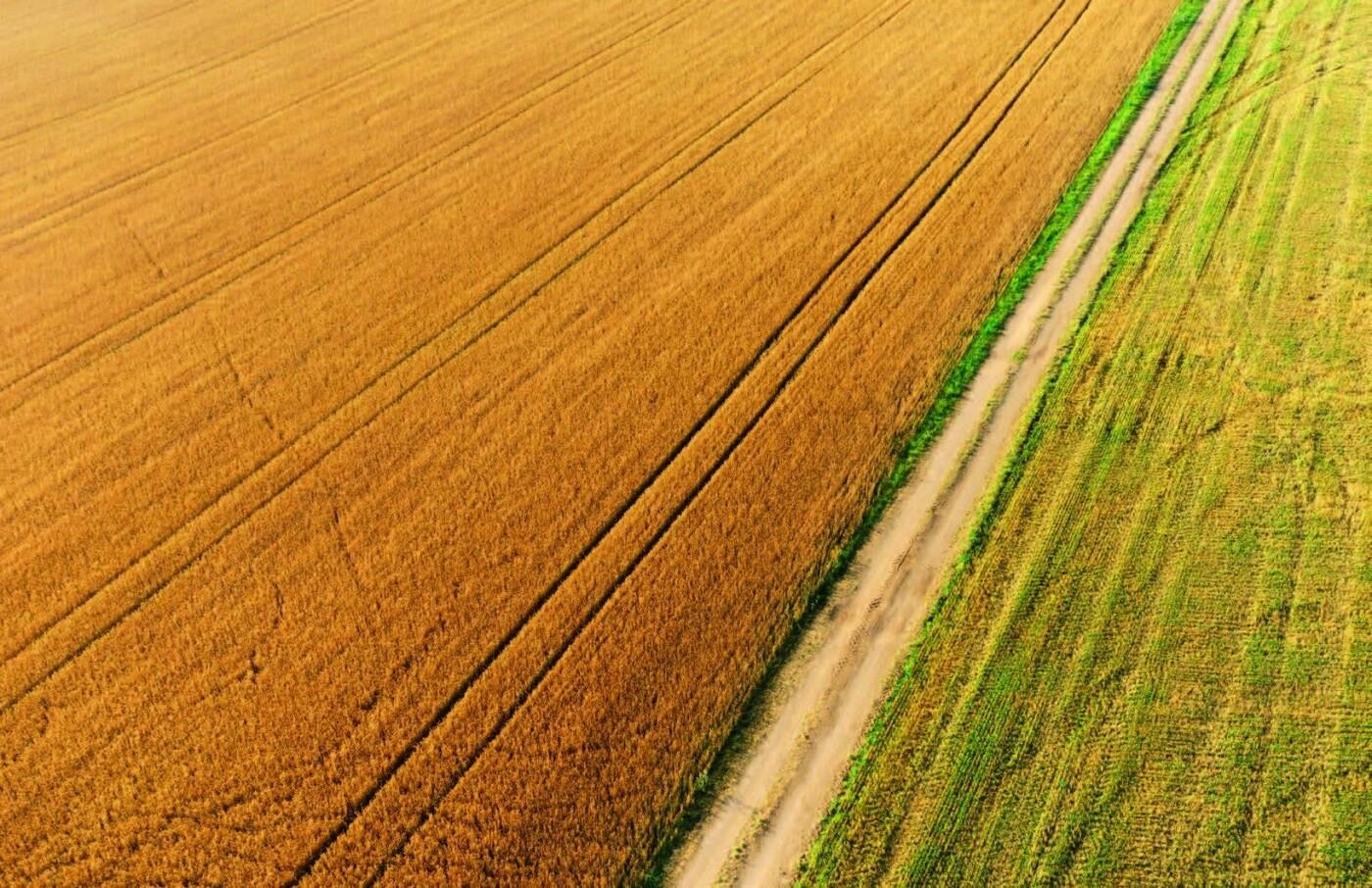 Мішки зерна замість грошей: чому мораторій на продаж землі буксує розвиток сіл Сумщини, фото-1