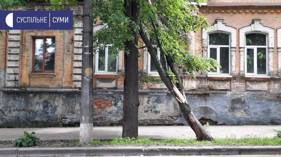 У Сумах вітер повалив кілька дерев, фото-2