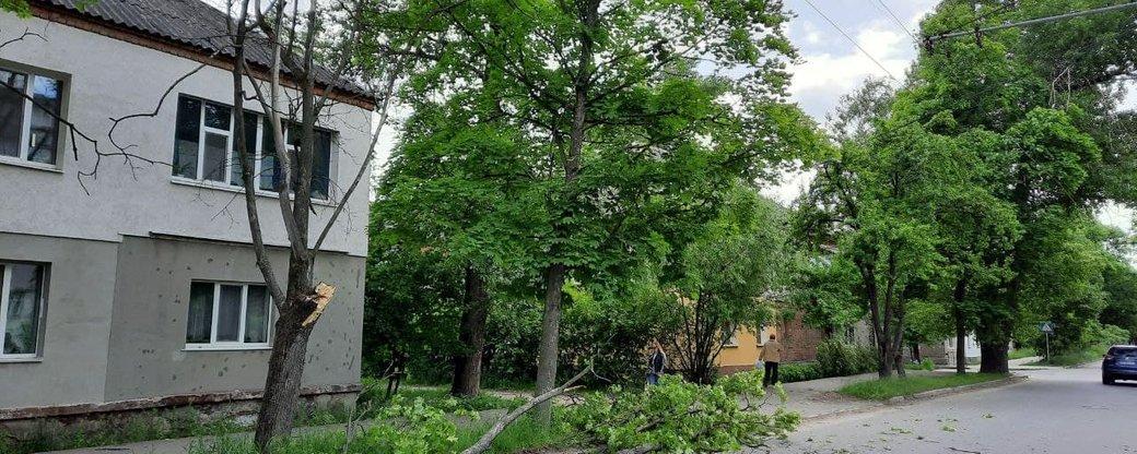 У Сумах вітер повалив кілька дерев, фото-1