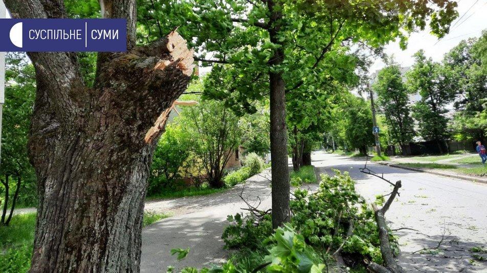 У Сумах вітер повалив кілька дерев, фото-3